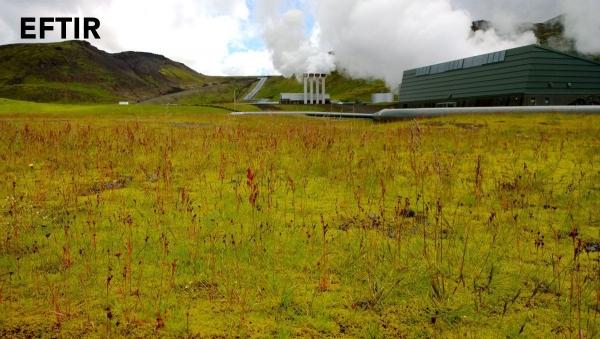Hellisheiðarvirkjun, vegetation reclamation
