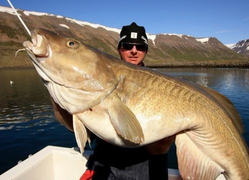 cod, sea angling