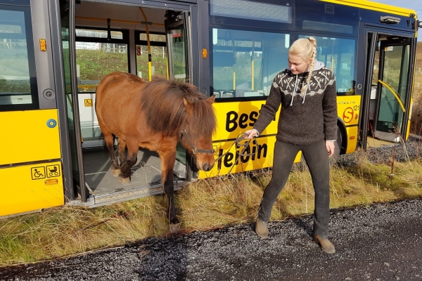Horse on the bus