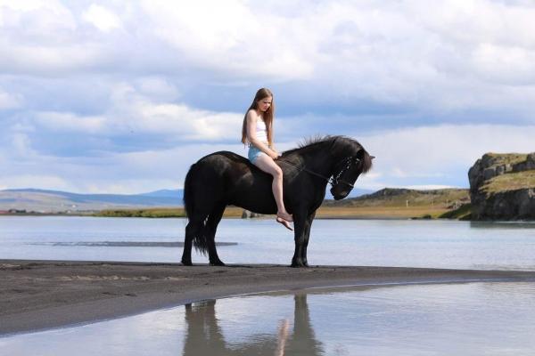 Icelandic horse, Sturlureykir
