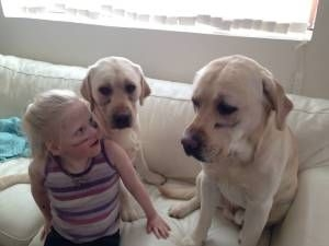 Smith Magenis Syndrome help dogs