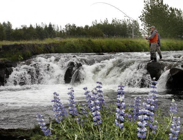 Fiskveiði, veiði, fly fishing