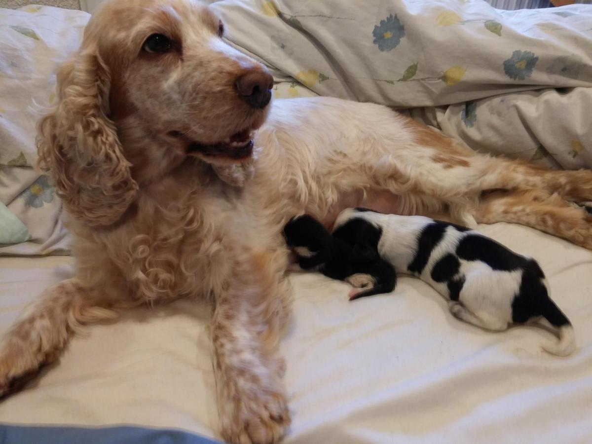 Dog Adopts Orphaned Kittens