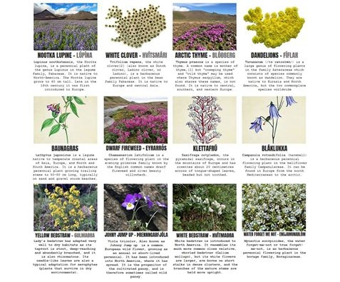 Great New Website Helps You Get To Know The Plants And Flowers You