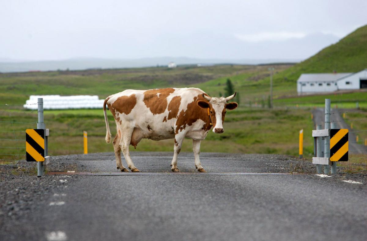 ^ Family run afé ow is located in a modern cowshed in north ...